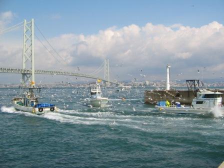 イカナゴ漁o03