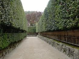 銀閣寺 緑の街道