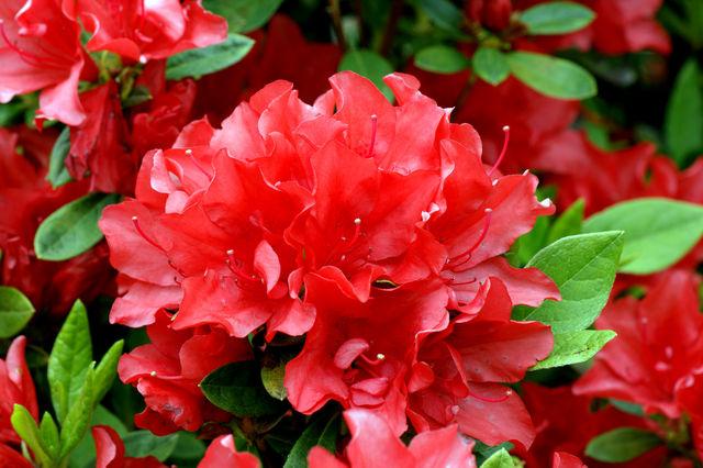 春の花 017