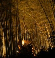 竹の小道、ライトアップ