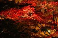 紅葉、夜間