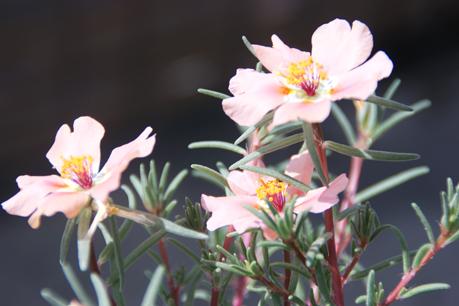夏の花102