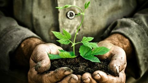 plant_soil_hands