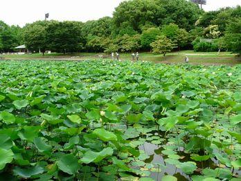 長居植物園 大池