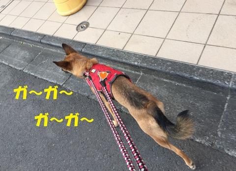 お散歩1T