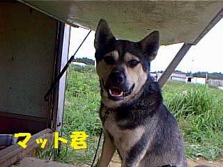 chibawan_a_88_1T