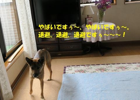 IMG_4325 文字