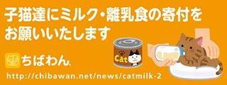 子猫ミルク