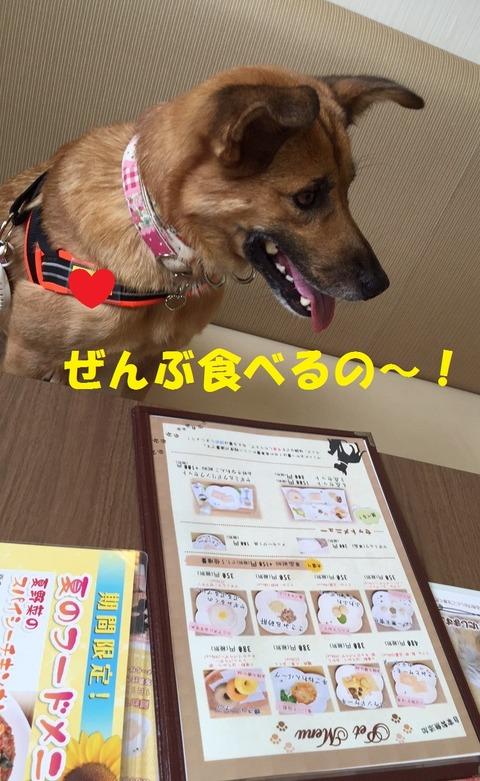 ゆめこ_170808_0117 T