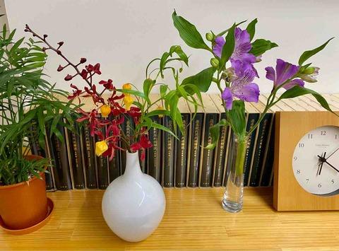 相談室の花