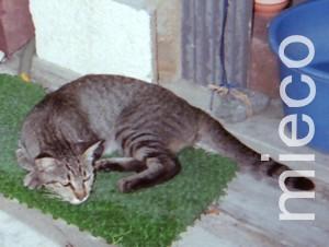 釣具屋の看板ネコ*トラ美1