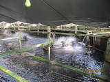 石井水産養殖池