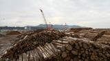 志布志港の材木貯留地