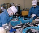 銚子の地場産業である水産加工業