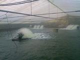 愛知県三河一色町の養鰻池