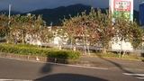 飯田市のりんご並木