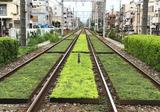 都電荒川線沿線の緑化が進んでいる