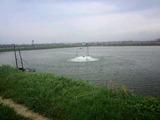 広東省台山の養鰻池
