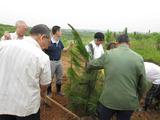 日中緑化基金協会による中国での植林の様子