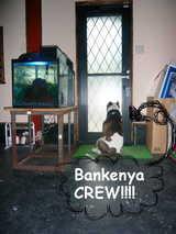 BANKENYACREW!!