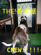 THE番犬屋
