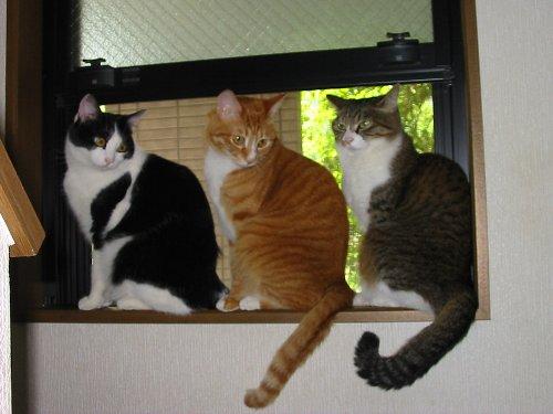 窓の上の3ニャン01