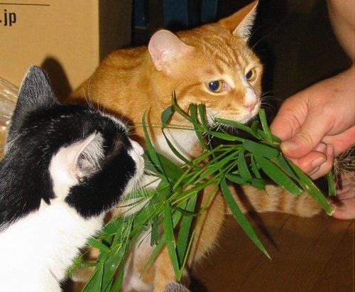 草大好き!