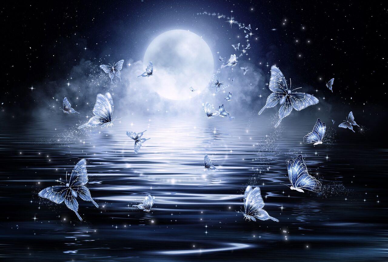 蝶々 満月