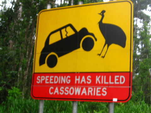 Warning-Sign-To-Protect-Cassowaries-On-Austrailian-Road-500x375
