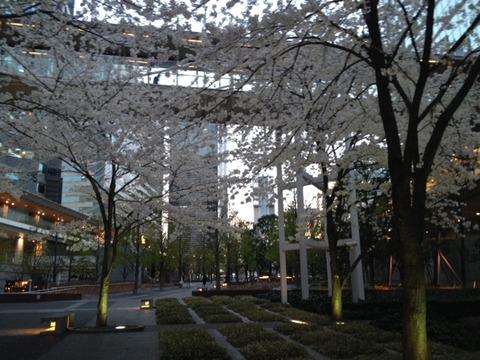 sakura-shinagawa2