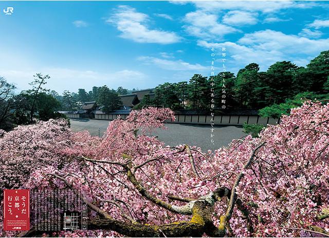 kyoto-sakura-main