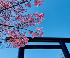 2020.03桜 - コピー