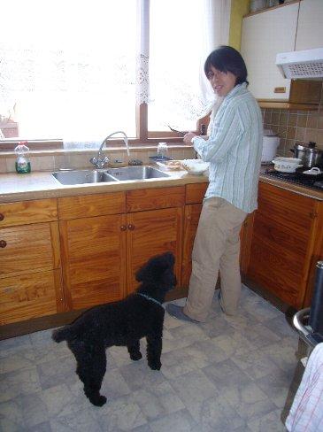 オランダの13歳の老犬サミ