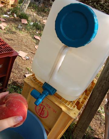 桃洗い水道
