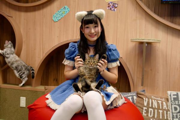 猫耳女子とのトークも楽しめる猫カフェ 秋葉原『僕と猫』はかわいさ天国