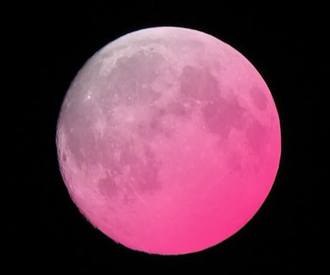 pinkmoon01