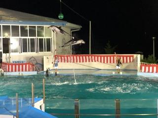 能登島水族館のイルカショー