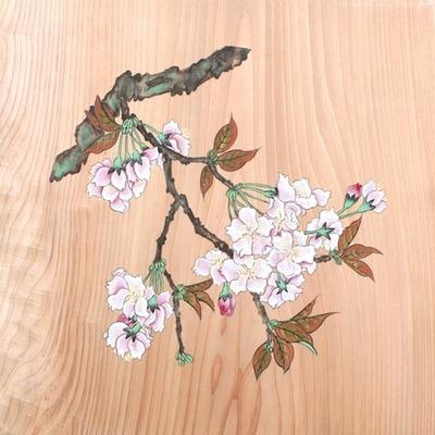 桜5 のコピー