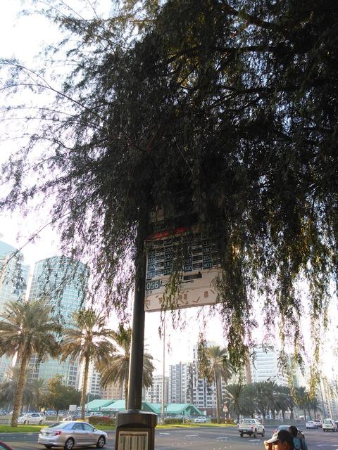 ドバイからアブダビへ小旅行_20151230_165005