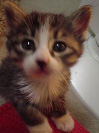 2005,4,13子猫の兄妹 048