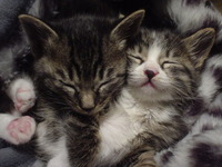2005,4,13子猫の兄妹 006