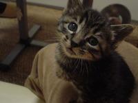 2005,4,13子猫の兄妹 073