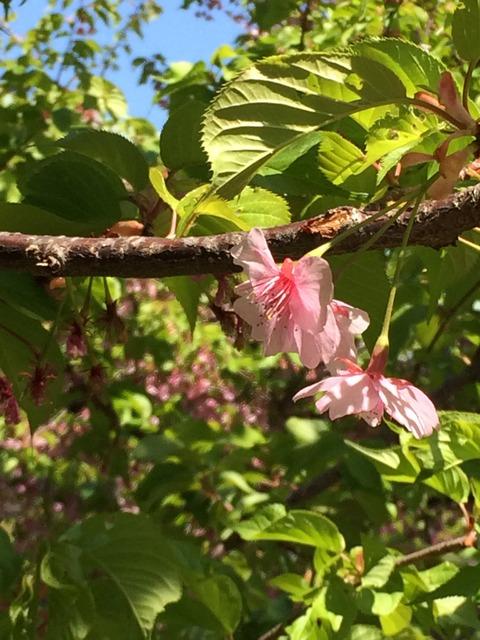 春満載 (4)