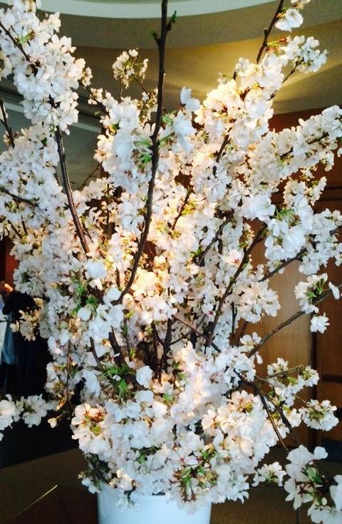 桜便り (2)