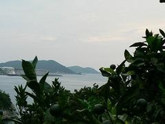 海とみかん