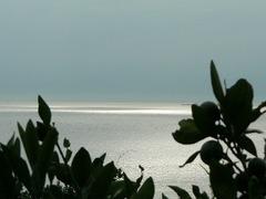 みかんと海
