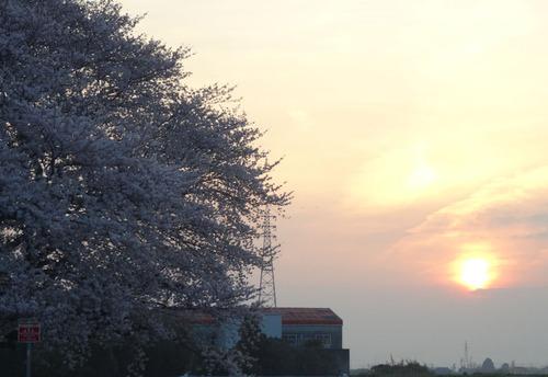 20150331さくら夕日2