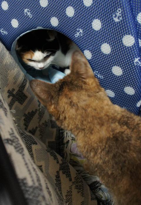 猫ベッドに8
