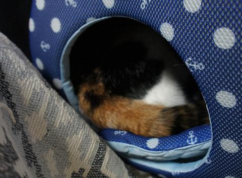 猫ベッドに10