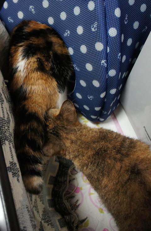 猫ベッドに5